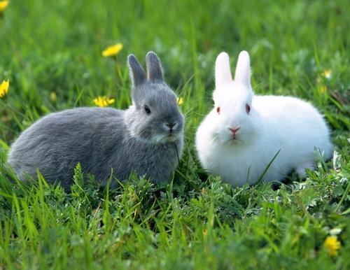 又香又馋又贵的四川麻辣兔头,其实可以自己动手做