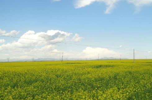 """""""十四五""""期间青海高标准农田将接近500万亩"""