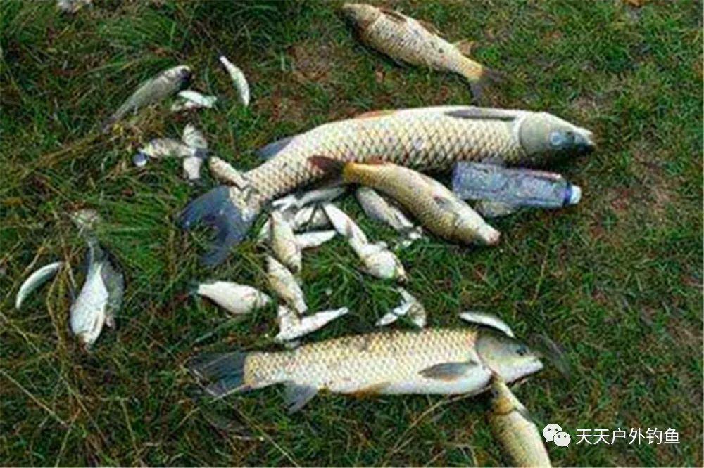 图解钓鱼调漂的5种方法,各有各的特点,适合不同的鱼情