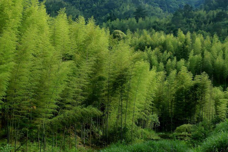 周末去哪儿?福建省17个国家级自然保护区介绍
