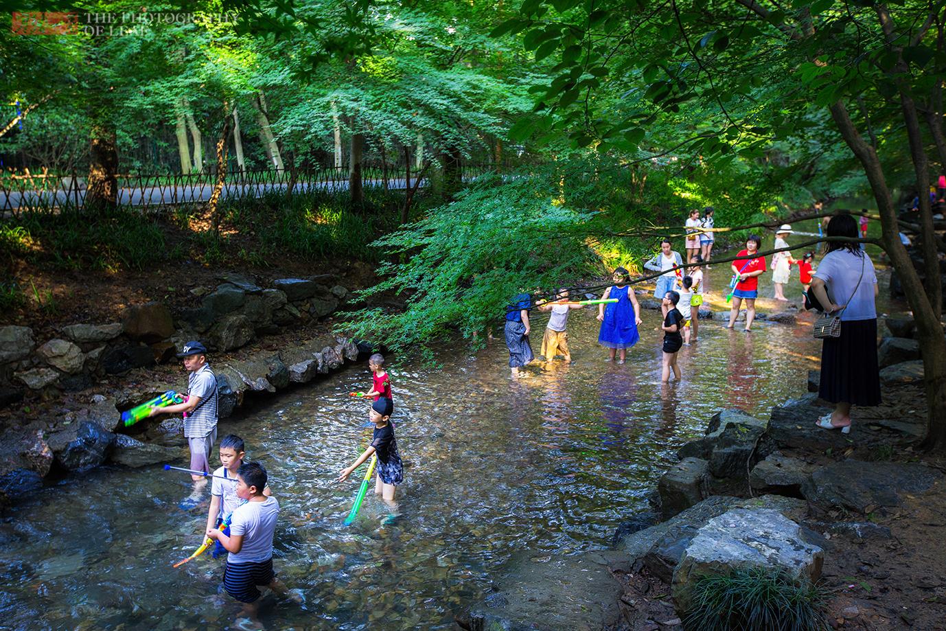 杭州人的避暑胜地,却是外地游客最少的西湖十景之一,你去过吗?#金猫榜#