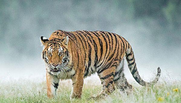 2022虎年出生的人的命运如何,属虎的几月出生最好农历
